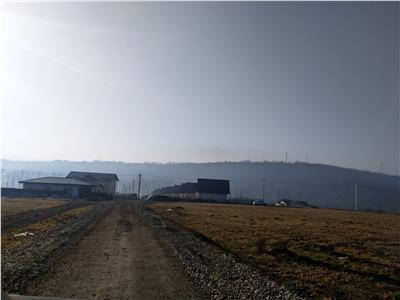 Teren 13.000 mp, pretabil case individuale, 5 drumuri Valea Adanca
